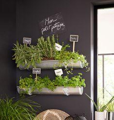 Des herbes aromatiques dans la cuisine