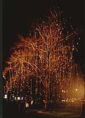 Tree Dressing Day Katsuya Ise