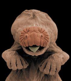 Microscopic Photography, Macro Photography, Animal Photography, Beautiful Bugs, Animals Beautiful, Baby Animals, Cute Animals, Tardigrade, Cute Alien