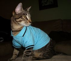 Businessman Cat :) Kittens In Costumes, Halloween Cat, Halloween Costumes, Cat Dresses, Cute Cats, Kitty, Animals, Pretty Cats, Little Kitty