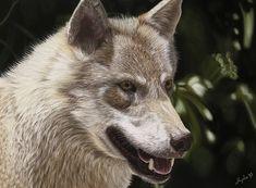"Wolf Fine Art Print of my original pastel painting ""Wolf's gaze""! Thing 1, Beautiful Wolves, Surrealism Painting, Pastel Pencils, Pastel Drawing, Animal Paintings, Beautiful Creatures, Original Artwork, Fine Art Prints"