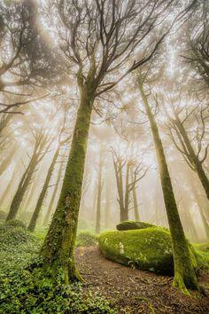 Magic garden (by Paulo Benjamim)