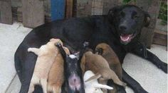 We want animal shelter in Izmir