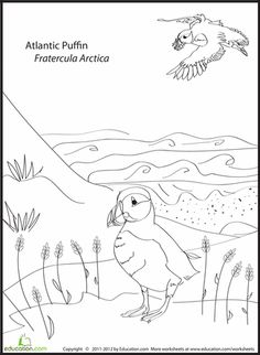 First Grade Animals Worksheets: Atlantic Puffin Coloring Page Polar Animals, Animals For Kids, Farm Animals, Cute Animals, Animal Worksheets, Coloring Worksheets, Puffins Bird, Bird Coloring Pages, Animal Science