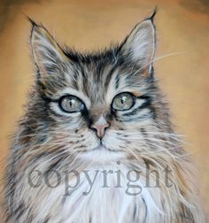 pastel painting Maine Coon cat by Silvana Robinson