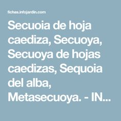 Secuoia de hoja caediza, Secuoya, Secuoya de hojas caedizas, Sequoia del alba, Metasecuoya. - INFOJARDIN.