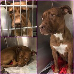 12/20/16 - TO BE KILLED TODAY 12/20/16 - AT 6 PM -Urgent Dogs of Miami (@urgentdogsofmiami) | Instagram photos and videos