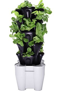 Smart Farm  Automatic Self Watering Garden  Grow Fresh Healthy Food Virtually Anywhere Year Round  Soil or Hydroponic Vertical Tower Gardening System By Mr Stacky Standard Kit Black * Want to know more, click on the image. (This is an affiliate link) #GardeningandLawnCare