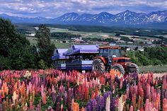 富良野Flower Land觀光農場