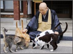 "The monks at the Soto Zen temple, Gotanjoji, in Echizen, Fukui Prefecture adopted their first 4 stray cats 12 years ago. ""Now, with 52 cats at the temple, it attracts about 10,000 visitors each year."""