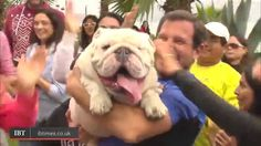 Watch Otto the skateboarding dog break Guinness World Record in Peru