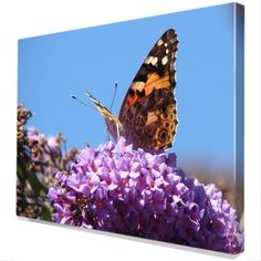 Distelvlinder binnenkant vleugel op Canvas