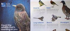 The RSPB Big Garden Birdwatch 2016.