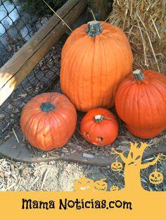 Need Halloween recipes?