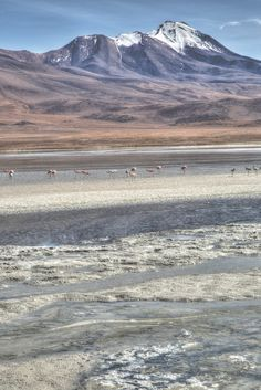Sulfur, salt, minerals, flamingos and volcanos. Bolivia is a wild, weird and wonderful place.  Find out more of what to see on our blog.
