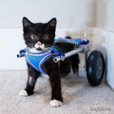 Aprenda como cuidar e melhorar  a qualidade de vida  do seu animal com deficiência física