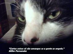 Meu sábio gatinho Platão
