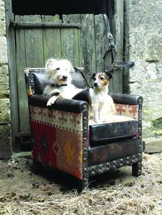 Studded leather and carpet chair with Jack Russell and pal. Jack Russells, Southwest Decor, Rustic Furniture, Leather Furniture, Western Homes, Western Decor, Jack Russell Terrier, Ranch Style, Cool Chairs