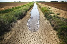 Western Cape declared a disaster area amid worst drought in 100 years