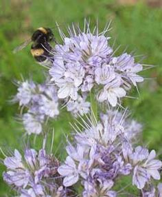 If you want to bring bees and other beneficial insects to your garden, start…