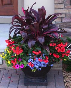 Colorful container garden #containergardens