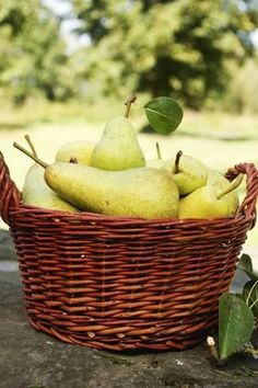 Pears are among the most popular local fruit varieties. But can dogs eat pears? Yes, pears are suitable for dogs but it's choking hazardous. Pear Blossom, Pear Recipes, Pear Trees, Can Dogs Eat, Dog Eating, Fruits And Vegetables, Farmers Market, Fresh Fruit, Food Photography