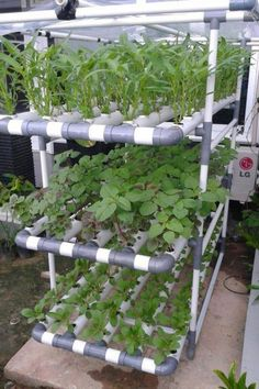 35 Popular To Try Hydroponic Gardening For Beginners Design Ideas And Remodel. If you are looking for To Try Hydroponic Gardening For Beginners Design Ideas And Remodel, You come to the right place. Aquaponics System, Hydroponic Farming, Backyard Aquaponics, Hydroponic Growing, Aquaponics Fish, Growing Plants, Growing Vegetables, Vertical Farming, Urban Farming