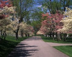 Dogwood Festival is Coming!!!  Fairfield, CT