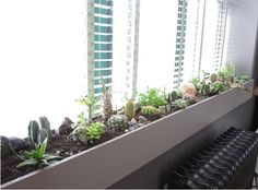 I love the idea of using sculptural, low-maintenance plants like cacti and succulents to line a large window.  Source