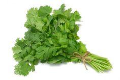 Coriandrum sativum, llamado popularmente cilantro, perejil chino o dania, es una hierba anual de la familia de las apiáceas. Es la única especie del género Coriandrum, que es también el único miembro de la tribu Coriandreae