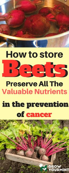 For all the reasons listed, beets deserve your (and my) undivided attention, and I will, therefore, dedicate my time and effort to teach you how to store beets properly and preserve all the valuable nutrients I have mentioned. #garden#gardening#store#beets#growyourmint.com