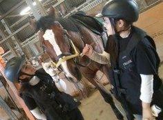 福岡市東区西戸崎にある 乗馬クラブで乗馬体験してきました 秋までにはライセンスを取得して 湯布院の山の紅葉を乗馬しながら 見たいな tags[福岡県]