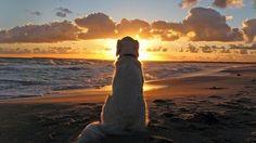 Un proceso de duelo siempre es difícil y aún más si se trata de un duelo por tu mascota. Tu mejor amigo se ha ido y las culpas pueden aflorar en ti.