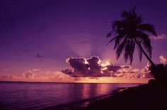 Photographed by Beverly Factor, the Tropical Palm wall mural from Murals Your Way will add a distinctive touch to any room. Choose a pre-set size, or customize to your wall. Beach Wall Murals, Custom Wall Murals, Purple Sunset, Sunset Beach, Pink Purple, Murals Your Way, All Things Purple, Wall Colors, Pretty In Pink