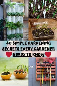 If you're into gardening, you're probably familiar with the rewarding feeling of having your first crop or blossom. But you also know just how tricky growing plants can be. As a gardener, you'll fight everything from pests to weather conditions to acidic soil while trying to get your first bumper crop. Even if you're naturally blessed with a green thumb, you've probably worked really hard to get your garden to bloom. Veg Garden, Vegetable Garden Design, Brick Patterns Patio, Gardening Tips, Bucket Gardening, Starting A Garden, Cactus, Home Landscaping, Growing Plants