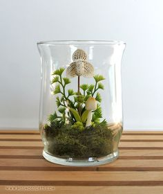 White Lady Slipper Orchid Terrarium by Miss Moss