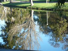 adelaide reflections