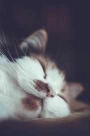 Кошечка*
