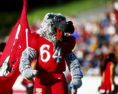 The Lobo on Game Day Picture at New Mexico Lobo Photos