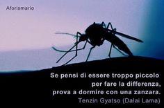 Aforismario®: Zanzare - Frasi e citazioni anofele