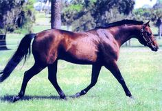 Reining, dressage, driving, hunter, pleasure horse, Breyer model, sire, bronze statue, Silver Spur winner, AQHA Superhorse, philanthropist. That was Rugged Lark. He was inducted into the Hall of Fame in 2006. Learn more about the AQHA Hall of Fame inductees at http://aqha.com/Foundation/Museum/Hall-of-Fame/Hall-of-Fame-Inductees.aspx .