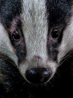 Animal Close Up