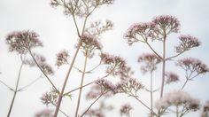 In the wind by Kim von Essen on 500px