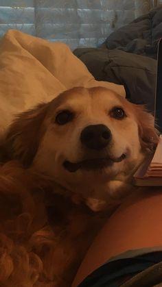 When I tell my dog she's going on Snapchat http://ift.tt/2nliN8Q
