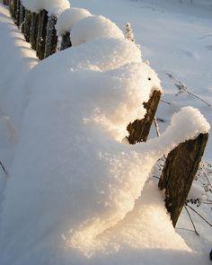 Любопытный сосед #забор #зима #любопытство #снег #сосед