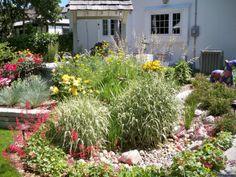 Rain garden for the back yard swale