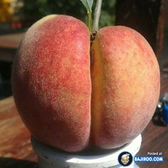 Erotic pictures of fruits and vegetables