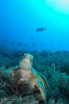 another turtle photo before bedtime. good night world! by wendymd, via Flickr