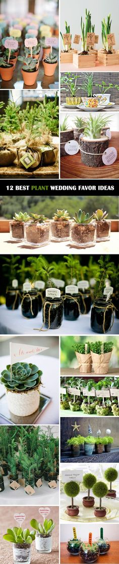 12 Ultimate Great Ideas for Lovely Plant Wedding Favors