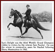 1963 World Grand Champion Tennessee Walking horse, Sun's Delight. This is where most of our horses came from!